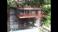 Pigeon Loft Design