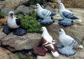 Pigeon Bird Information