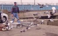 Pigeon Basics