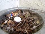 Pigeon Nesting Habits