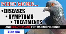 Pigeons Disease Symptoms
